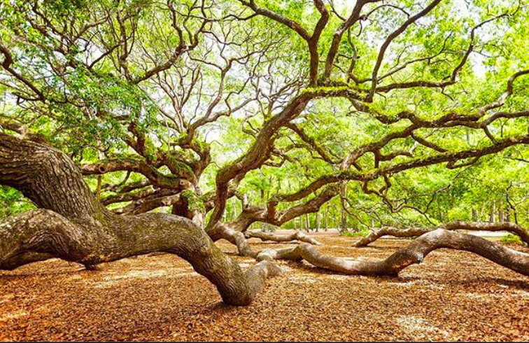 CHStoday Angel Oak